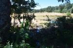 4 Charca alimentada del agua de la regadera de El Bosque, a la que no tiene derecho
