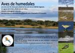 Aves de humedales