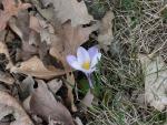 Cara: La flor