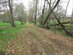 El Bosque Camino de Poniente. Situación actual