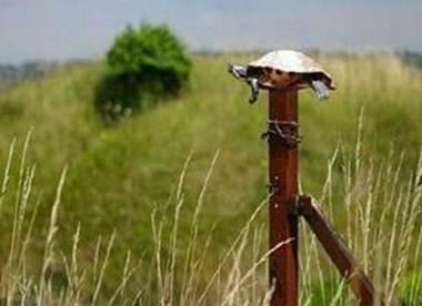 La tortuga encima del poste