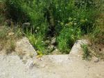La regadera entra en el Parque Forestal de Monte Mario. No lleva nada de agua.